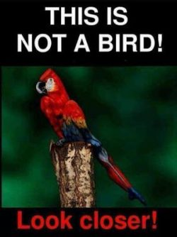 This is not a bird !